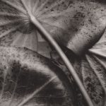 Photographs by Group f/64 on View this Fall at the Portland Museum of Art