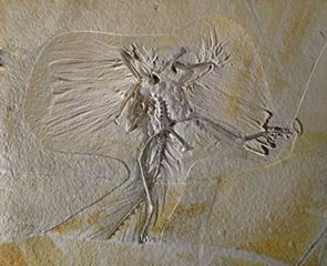 Archaeopteryx: Icon of Evolution at the Houston Museum of Natural Science