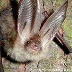 Bats at The Natural History Museum