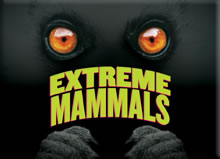 Cleveland Museum of Natural History Opens Extreme Mammals
