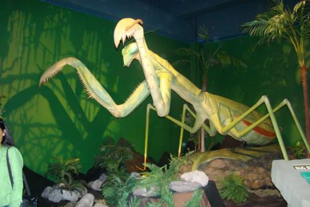 Mary Brogan Museum of Arts and Science Presents BIG BUGS The World of Giant Insects