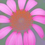 Sterling and Francine Clark Art Institute Hosts Focus on Nature: A Summer Photography Workshop