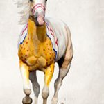 "National Museum of the American Indian Announces ""A Song for the Horse Nation"" Exhibition"