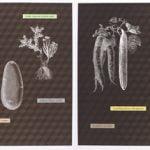 Kunststiftung NRW (Arts Foundation of North Rhine-Westphalia) announces editions