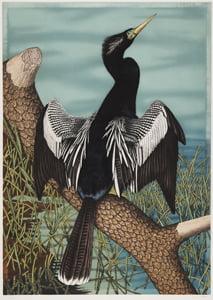 Kalamazoo Institute of Arts opens Birds of a Feather. John Costin and John James Audubon
