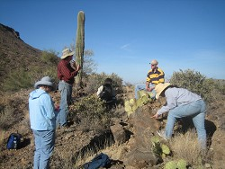 Arizona-Sonora Desert Museum presents Natural History of the Sonoran Desert