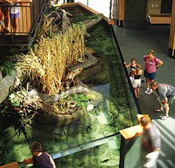 National Mississippi River Museum & Aquarium presents Amazon Voyage. Vicious Fishes & Other Riches.