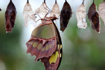 Natural History Museum opens Sensational Butterflies exhibition