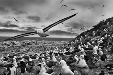 Natural History Museum presents Sebastiao Salgado Genesis photographs exhibition