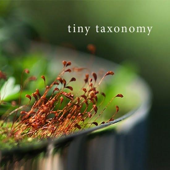 Tiny Taxonomy