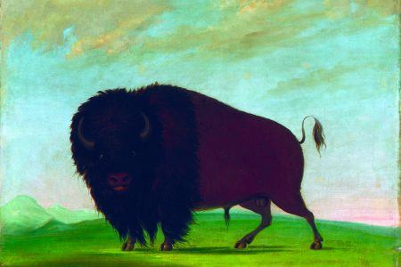 """George Catlin's American Buffalo"" Debuts at National Museum of Wildlife Art"