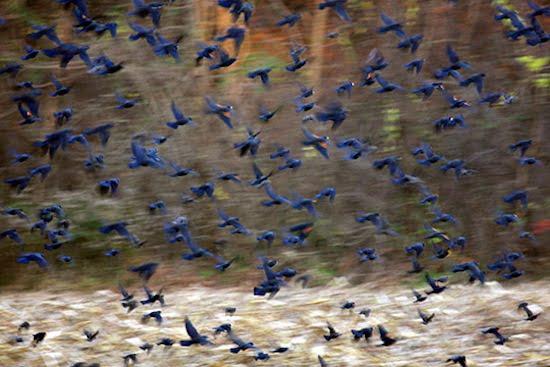 Carolyn Marks Blackwood Birds Series