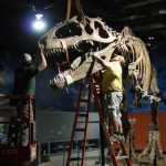 Dinosaurs begin to invade Cincinnati Museum Center during exhibition installation