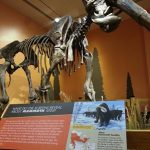 Indiana State Museum opens Ice Age Giants: The Mystery of Mammoths and Mastodons