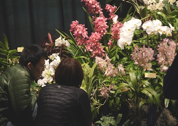 The International Orchid Show and Sale April 11-13, 2014, will transform the Academy into an orchid extravaganza.