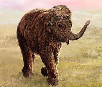 National Museums Scotland presents Mammoths of the Ice Age