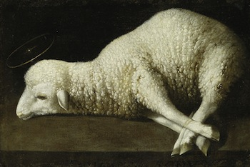 Francisco de Zurbarán Agnus dei ca. 1635-1640 Oil on canvas, 35,56 x 52, 07cm Inv. 1947.36 The San Diego Museum of Art, gift of Anne R. and Amy