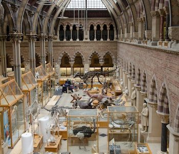 Oxford University Museum of Natural History Reopens to the Public