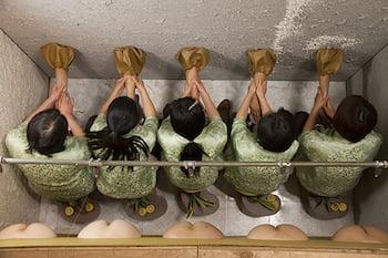 The Rose Art Museum opens MIKA ROTTENBERG: BOWLS BALLS SOULS HOLES