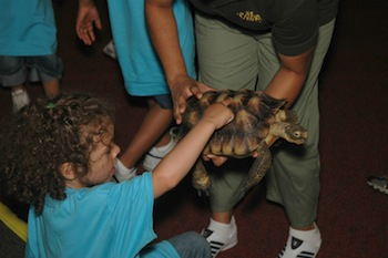 Touching live animals is one of the highlights of a visit to the Academy of Natural Sciences of Drexel University.