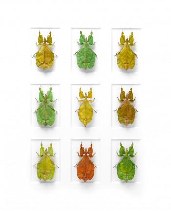 "Christopher Marley's ""Walking Weevils"" display various patterns and colors in Pinned: Insect Art, Insect Science, Aug. 9-Nov. 9."