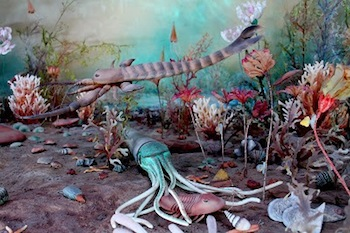 New exhibit showcases world's largest collection of Late Ordovician fossils