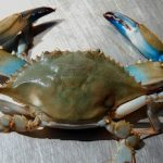 "CBMM presents ""State of the Crab"" this September"