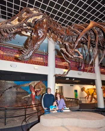 T. rex greets visitors to the Academy's signature Discovering Dinosaurs exhibition.