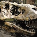 Join the celebration of prehistoric animals that once roamed our region