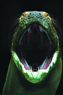 Titanoboa cerrejonensis was the largest snake that ever lived.