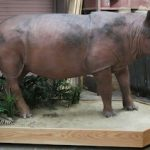 Rare Sumatran rhino finds new life at Cincinnati Museum