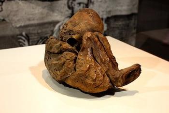CINCINNATI MUSEUM CENTER AND CINCINNATI CHILDREN'S HOSPITAL REVEAL RESULTS FROM NON-INVASIVE 3D SCAN OF PERUVIAN CHILD MUMMY