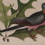 New exhibition at Cincinnati Museum Center highlights work of the first naturalist
