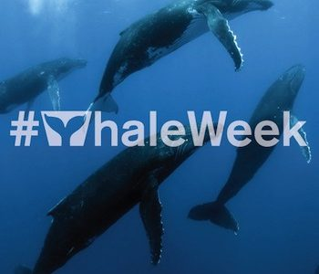 Dive in for a whale of a week at Cincinnati Museum Center