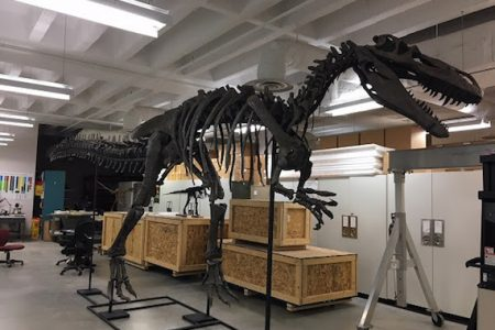 Cincinnati Museum Center to unveil new Torvosaurus dinosaur exhibit