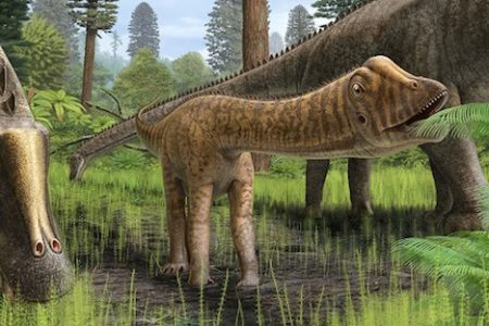 Dinosaur specimen collected by Cincinnati Museum Center examined by paleontologists