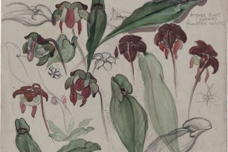 Bloom: Flowers from the Archives of American Art Opens March 1