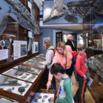 Lyme Regis Museum Announce Reopening