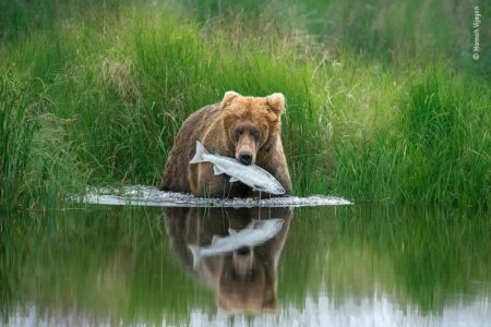 Wildlife Photographer of the Year at London's Natural History Museum