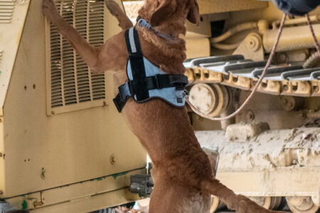 Chesapeake Bay Maritime Museum to host K-9 Nose Work event