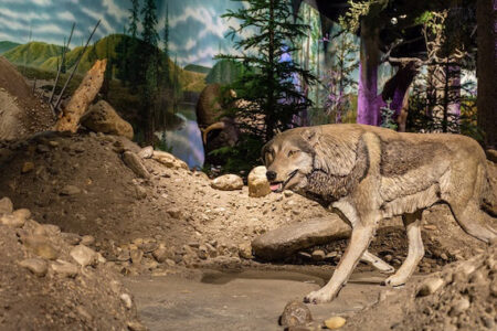 Ice Age Gallery returns at Cincinnati Museum Center