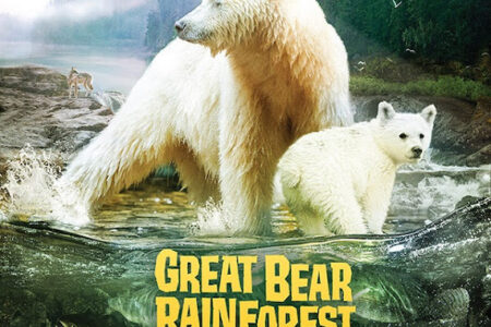Land of the Spirit Bear film at Cincinnati Museum Center